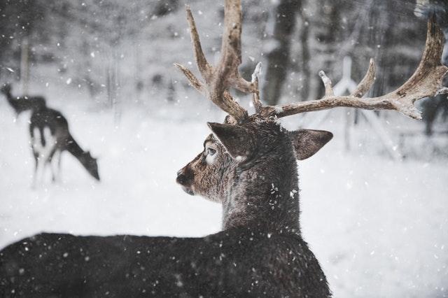 Leśna 21 zima