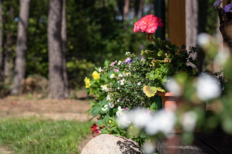 lesna 21 dom kwiaty